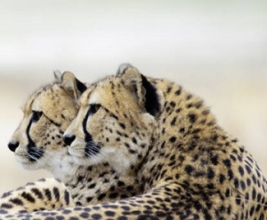 Kenya Safari Honeymoons